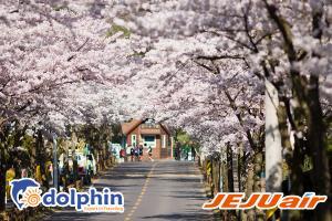 Tour du lịch Hàn Quốc Mùa hoa anh đào 2019: Seoul - Đảo Nami - Everland - Công Viên Yeouido 5N4Đ khởi hành từ HCM