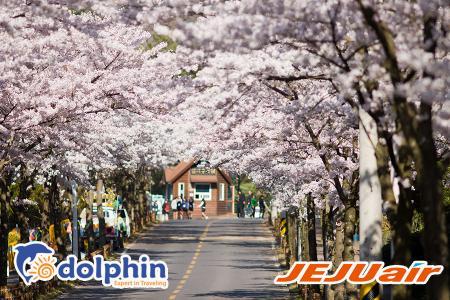 Tour du lịch Hàn Quốc Mùa hoa anh đào 2019: Seoul - Đảo Nami - Everland - Công Viên Yeouido 5N4Đ KS5*  khởi hành từ HCM