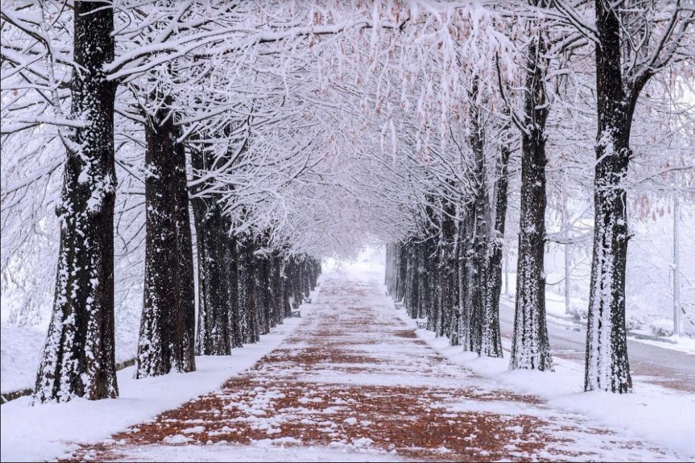 [Hà Nội] [Lễ Noel] Du lịch Hàn Quốc Mùa Đông Cao Cấp: Seoul - Everland - Nami - Trượt tuyết 5N4Đ Khách sạn 5* Quốc tế bay sáng Vietnam Airlines
