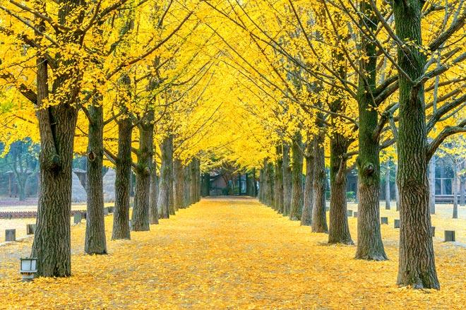 [Hà Nội] [Lễ Quốc Khánh 02/09] Du lịch Hàn Quốc Cao cấp 2019: Seoul - Everland - Nami - Cầu kính Skywalk - 5N4Đ Khách sạn 5* Quốc tế bay sáng Vietnam Airlines