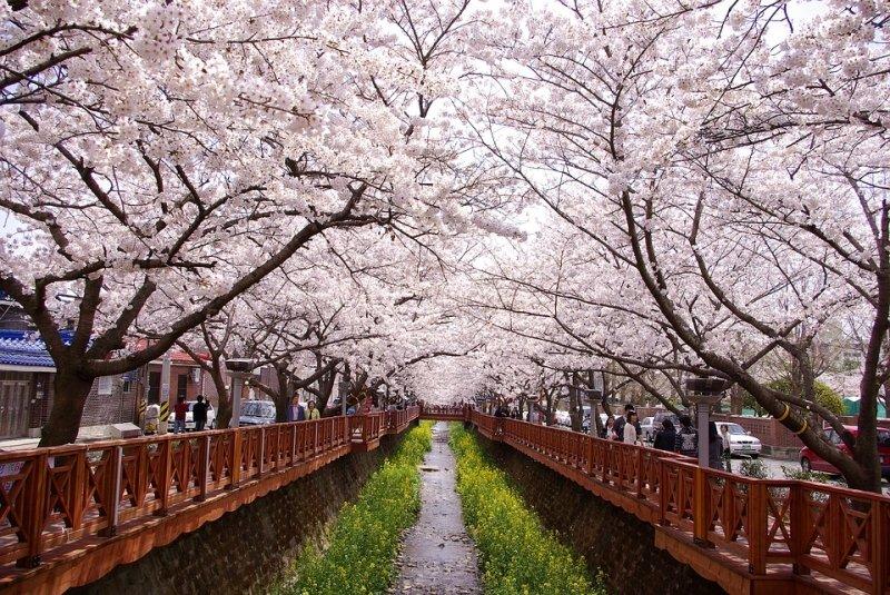 [Hà Nội] [Mùa Xuân] Du lịch Hàn Quốc Cao Cấp: Seoul - Nami - Everland - Công viên Yeouido 5N4Đ Khách sạn 5* Quốc tế Vietnam Airlines